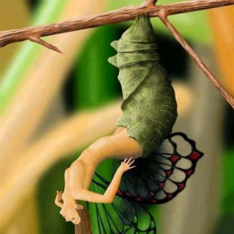 урокът-на-пеперудата-притча-evolife.bg